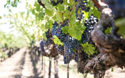 Central Coast Vineyards